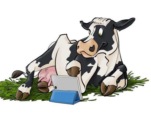 Schwarzbunte Kuh mit Tablet